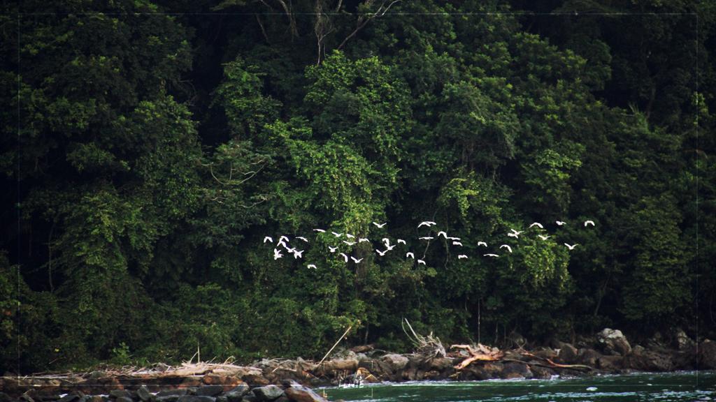 aves praia de boiçucanga